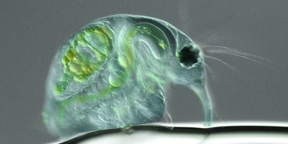 Imagem de As 15 fotos mais alucinantes de microscópios no site TecMundo