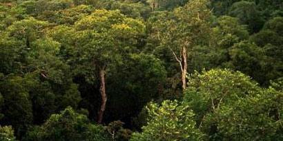 Imagem de Conheça as 5 árvores mais antigas do planeta no site TecMundo