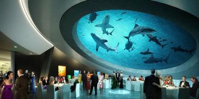 Imagem de Museu de Miami deve virar parque aquático para tubarões no site TecMundo