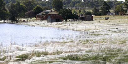 Imagem de Assustador: floresta de teia de aranha na Austrália no site TecMundo