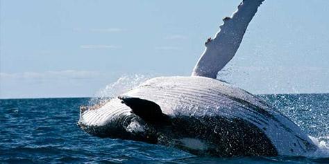 Imagem de Whaling: nova moda do Vine é pular que nem baleia [vídeo] no site TecMundo