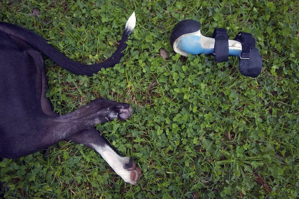 Imagem de Próteses animais: como elas podem beneficiar bichos e seres humanos? no tecmundo
