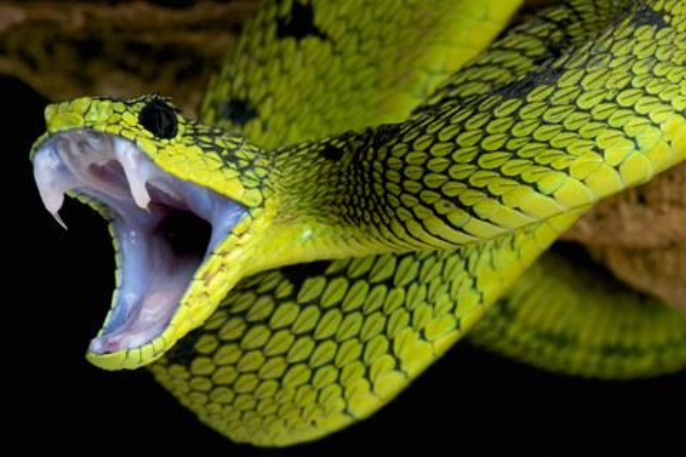 Imagem de GoPro cai em ninho de cobras e material gravado é assustador [vídeo] no tecmundo