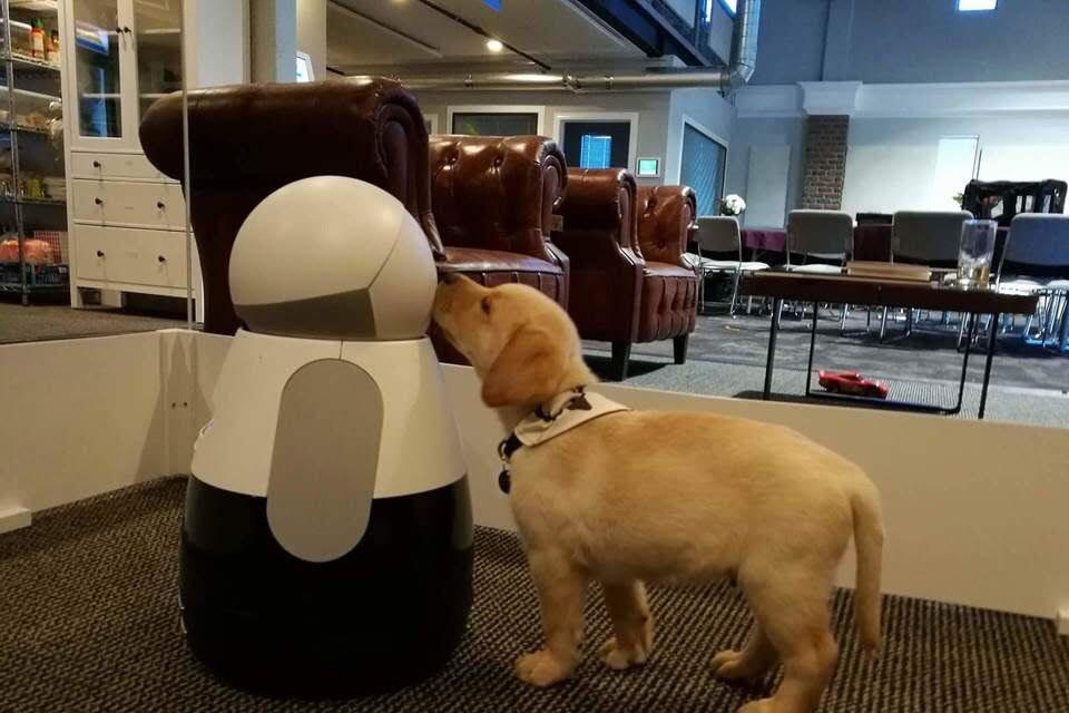 Imagem de Kuri: robô americano já é quase uma babá para animais domésticos no tecmundo