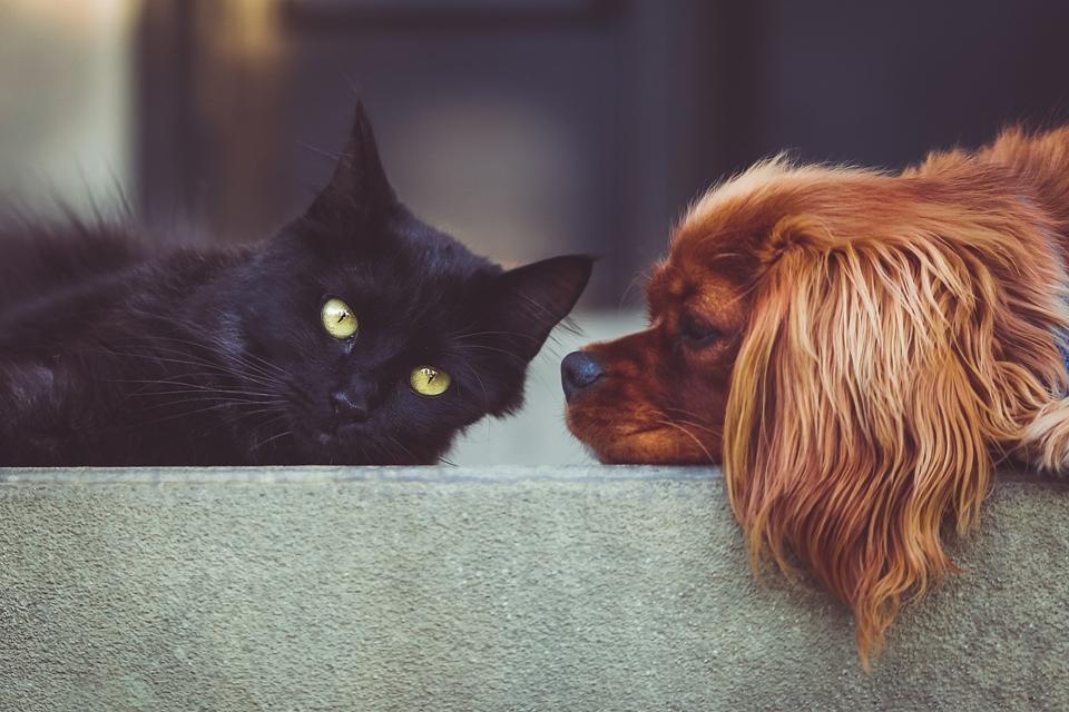 Imagem de ifood animal? Dot Pet é um app de entrega para o seu bichinho de estimação no tecmundo