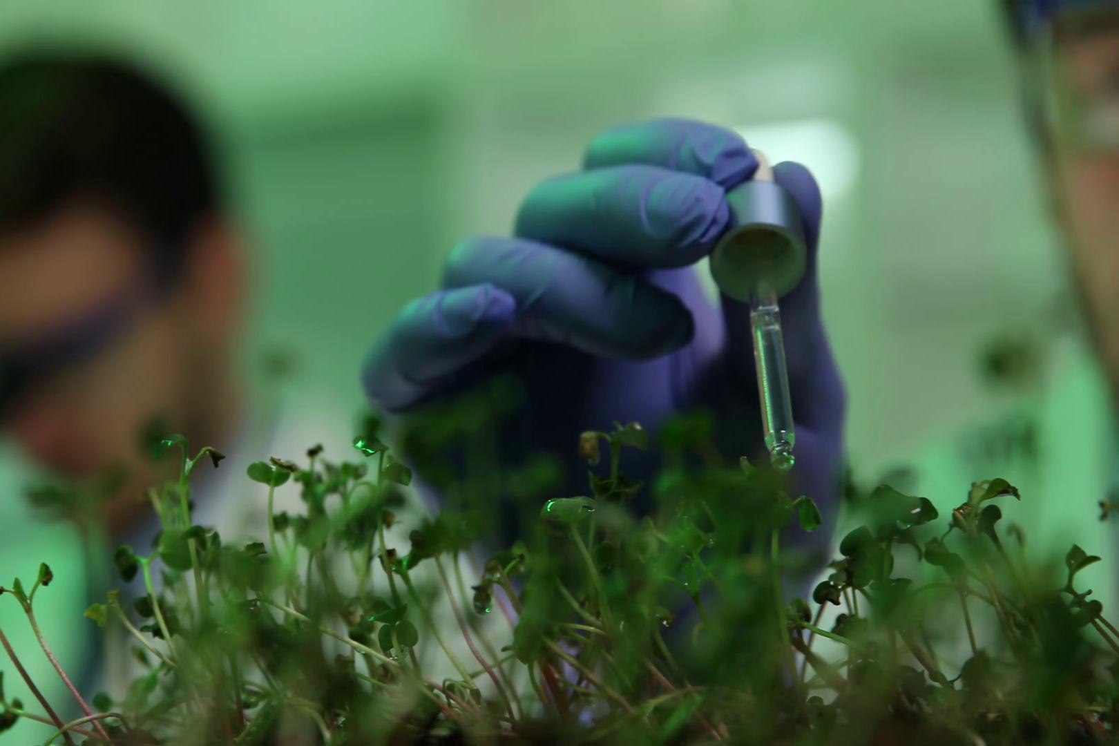 Imagem de Plantas alteradas podem ser usadas como sensores de risco biológico no tecmundo