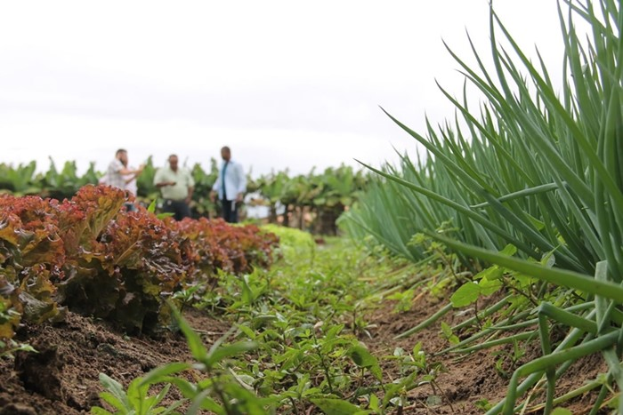 agroecólogo
