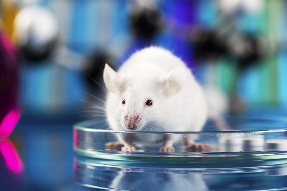 Imagem de Pela primeira vez, cientistas reduzem o tumor de um rato usando nanorrobôs no tecmundo