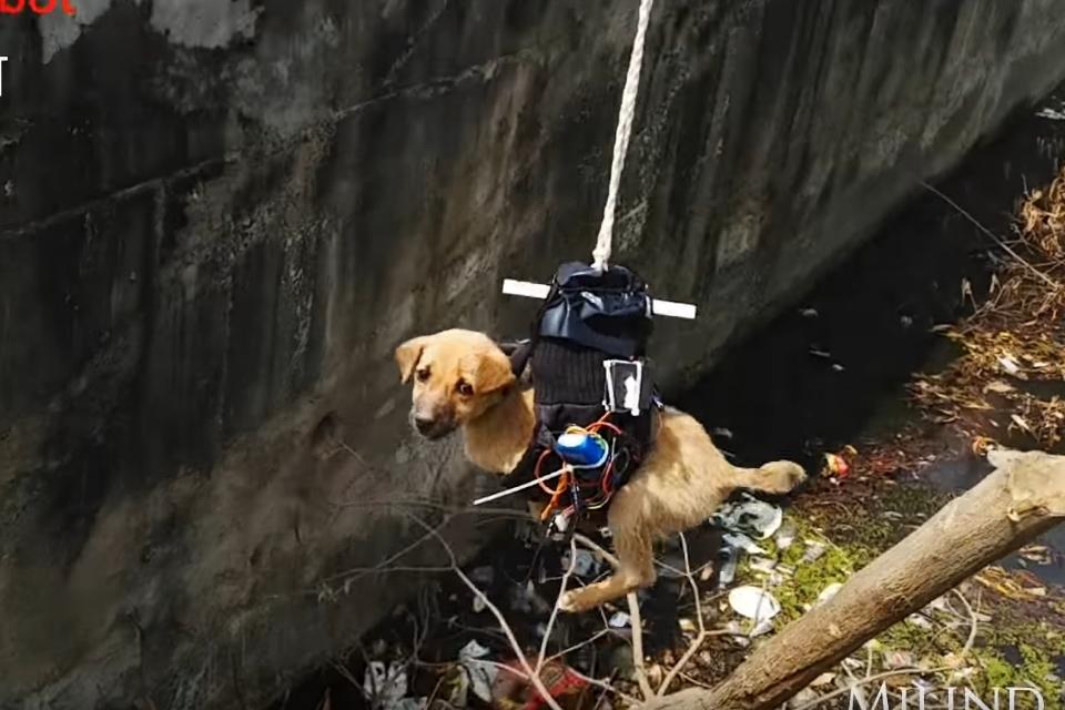 Imagem de Drone modificado resgata cachorrinho na Índia no tecmundo