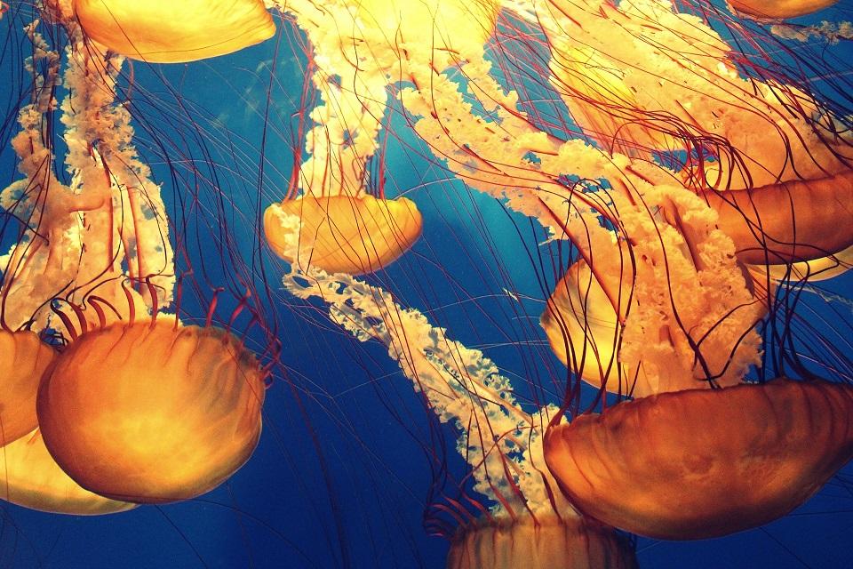 Imagem de Conheça a lâmpada que se move e imita uma água-viva no tecmundo
